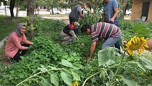 TRSM Danışanları Ektikleri Sebzeleri Toplamaya Başladı