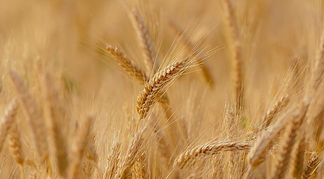 Karaman Çiftçisine 9 Milyon TL Destek