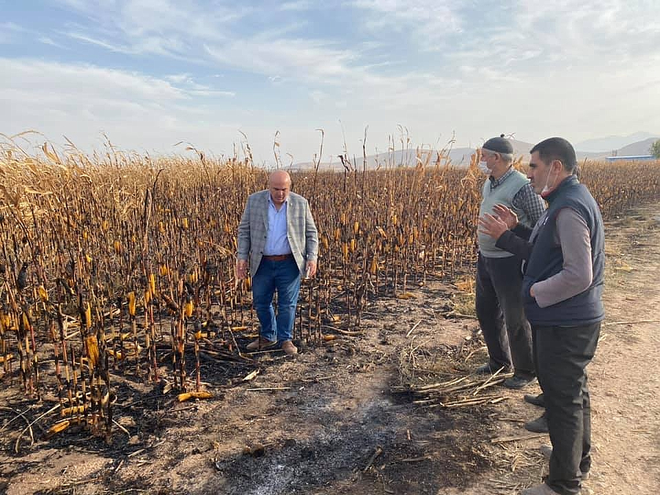 Kisecik Köyünde Çıkan Yangında 50 Dekar Ekili Alandaki Mısır Yandı