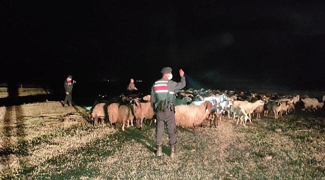 Karaman'da Kaybolan 170 Küçükbaşı Jandarma Ekipleri Buldu