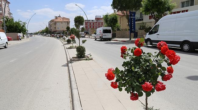 Karaman'da Şehir Merkezi Gül Ve Çiçeklerle Donatıldı